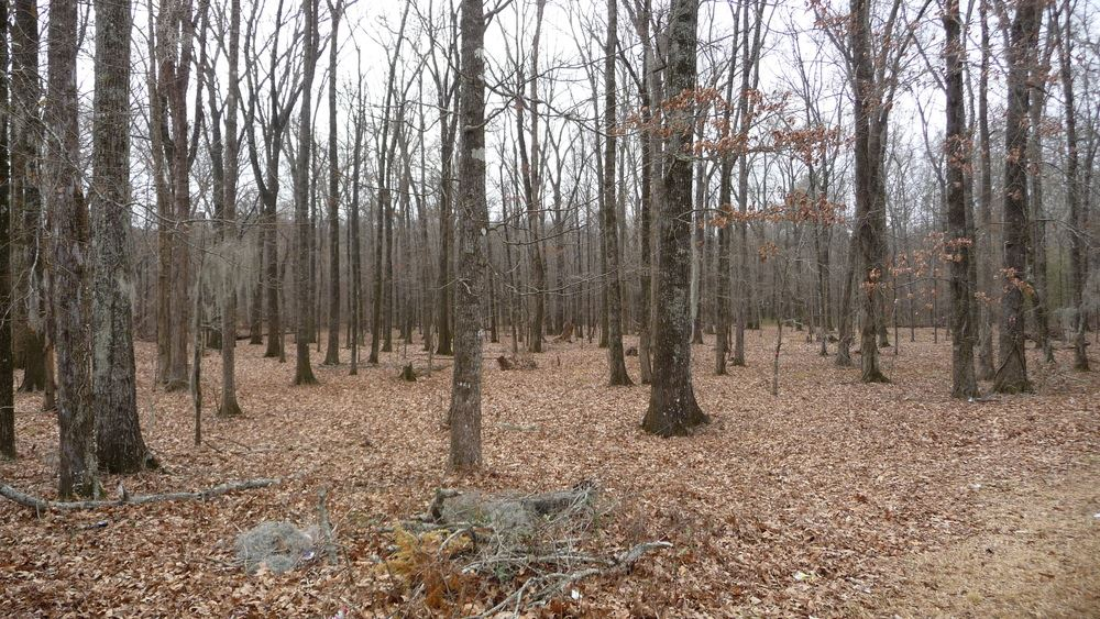 Land on Watkins Drive in Lakeover   6.15 Acres across from Echelon Business Park
