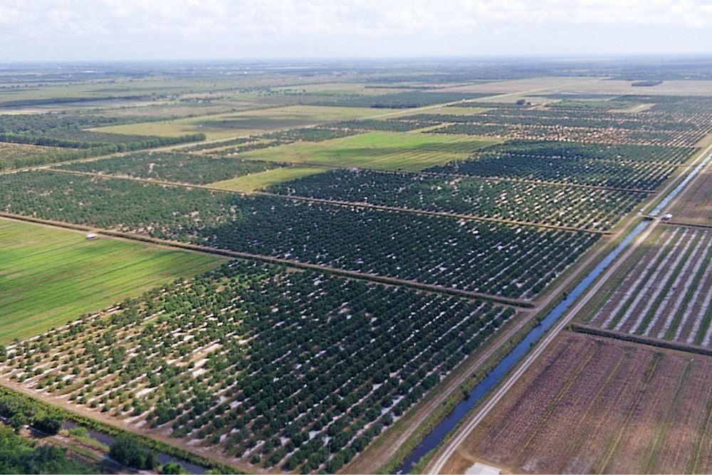 Seibels & Southern Comfort Grove - Florida Agricultural Portfolio