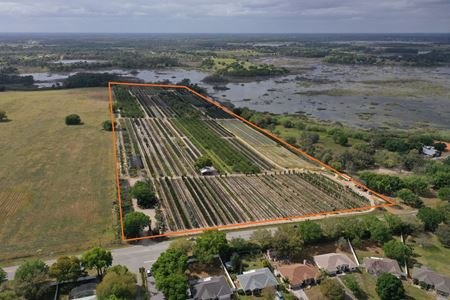 Lake County Tree Farm - Clermont