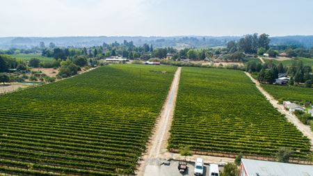 Permitted Winery Opportunity - Forestville