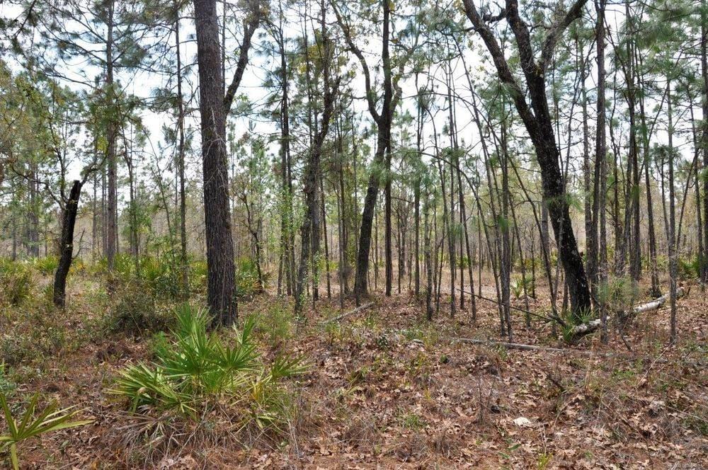Southwest Florida Water Management District Surplus Properties: Annutteliga Hammock Tract 1