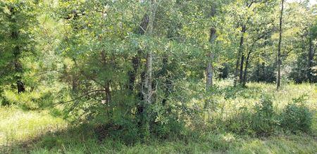 6.8 Acres - FM 1486 - Magnolia, TX - Magnolia