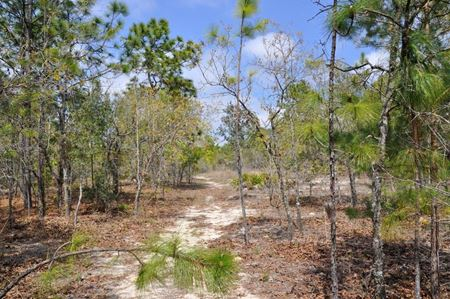 Southwest Florida Water Management District Surplus Properties: Annutteliga Hammock Tract 4 - Weeki Wachee