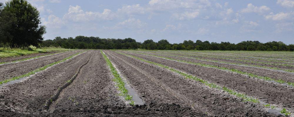 Polk Farmland South