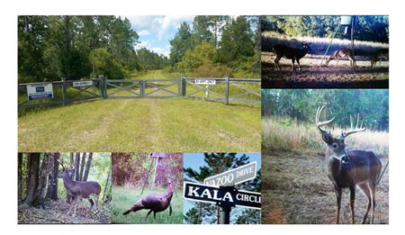 Kala Preserve - Crawfordville