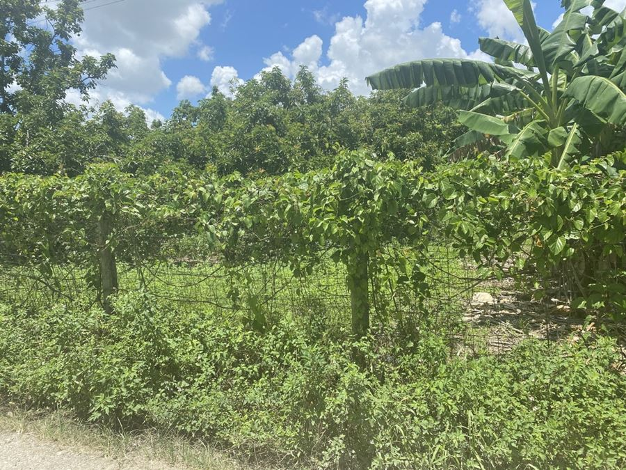 FIVE ACRES 19400 SW 153 Ave.